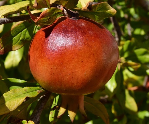 Pomegranate -  Vicky Mar Naturals Weight Loss Coffee Vanilla